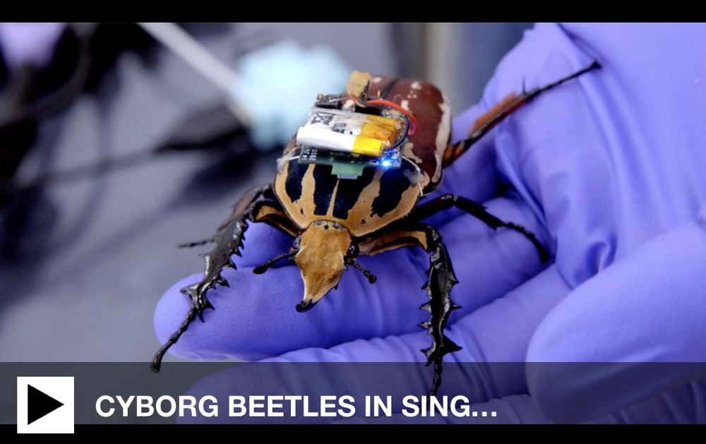 Cyborg Beetles Screengrab